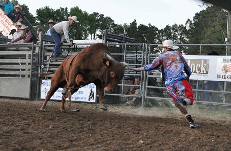 Bull Wrangler