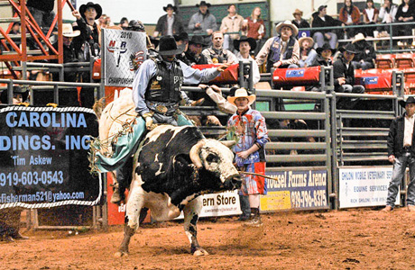 Bull Riding 12