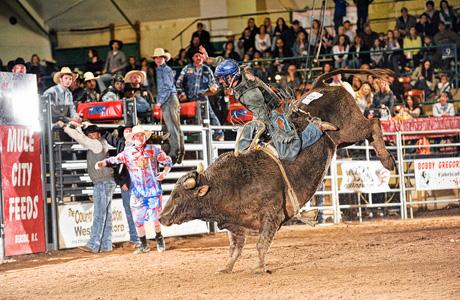 Bull Riding 6