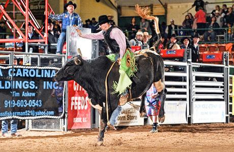 Bull Riding 8