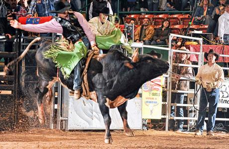 Bull Riding 9