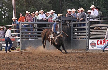 May 2011: Bull Riding 2