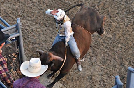 May 2011: Bull Riding 4