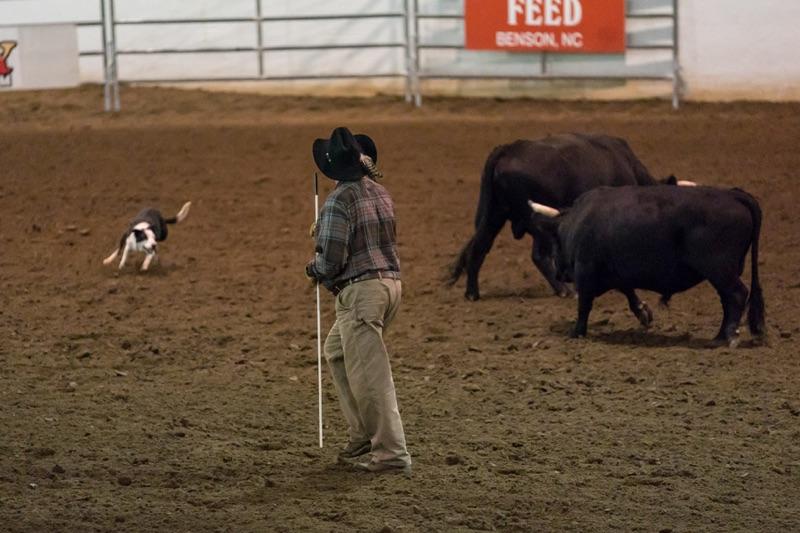 Jeff, Bull, Dog